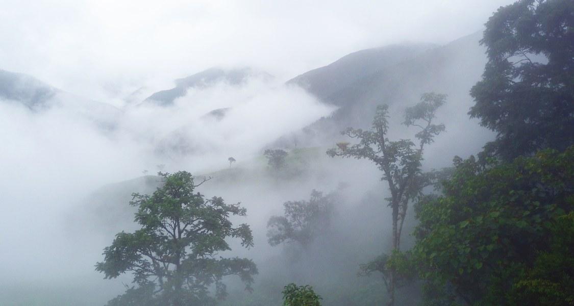 Foto des Bergregenwaldes im Tal des Rio San Francisco