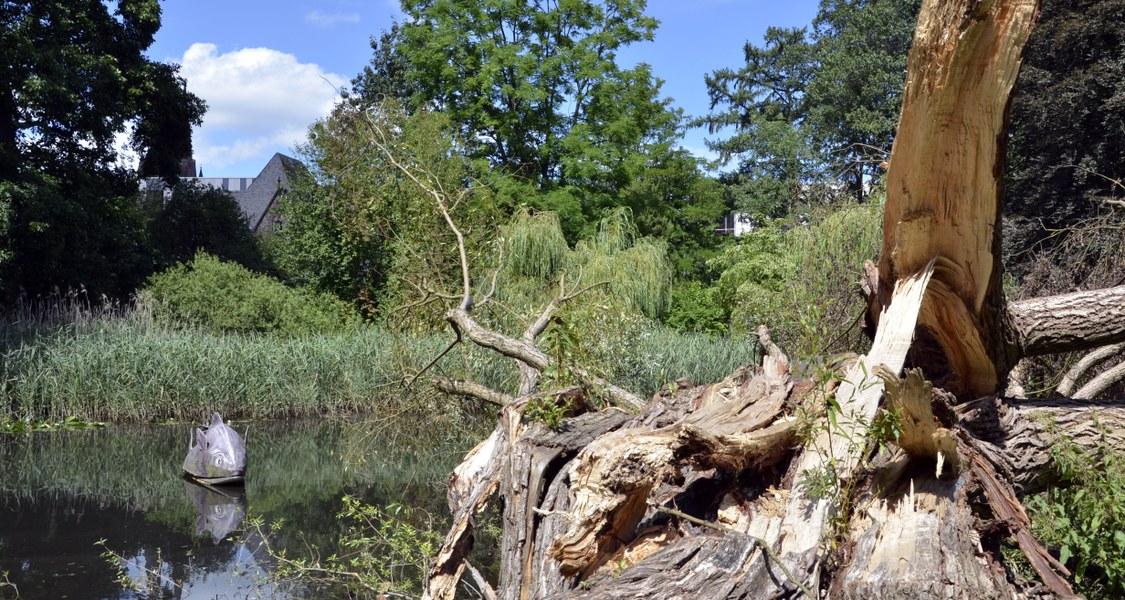 Baumwurzel und Teich im Alten Botanischen Garten