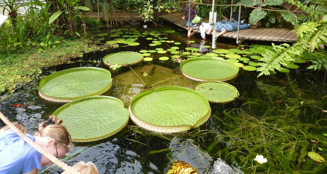 Blick auf Teich mit Seerosen im Gewächshaus des Botanischen Gartens Lahnberge mit spielenden Kindern am Rand