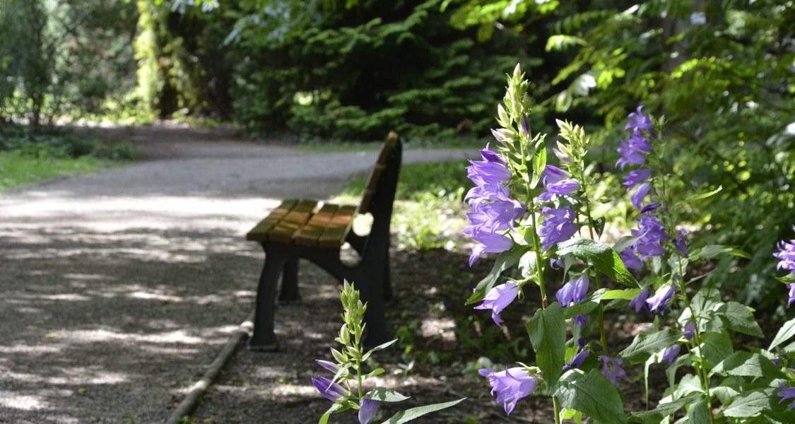 Foto von einer Parkbank im Alten Botanischen Garten