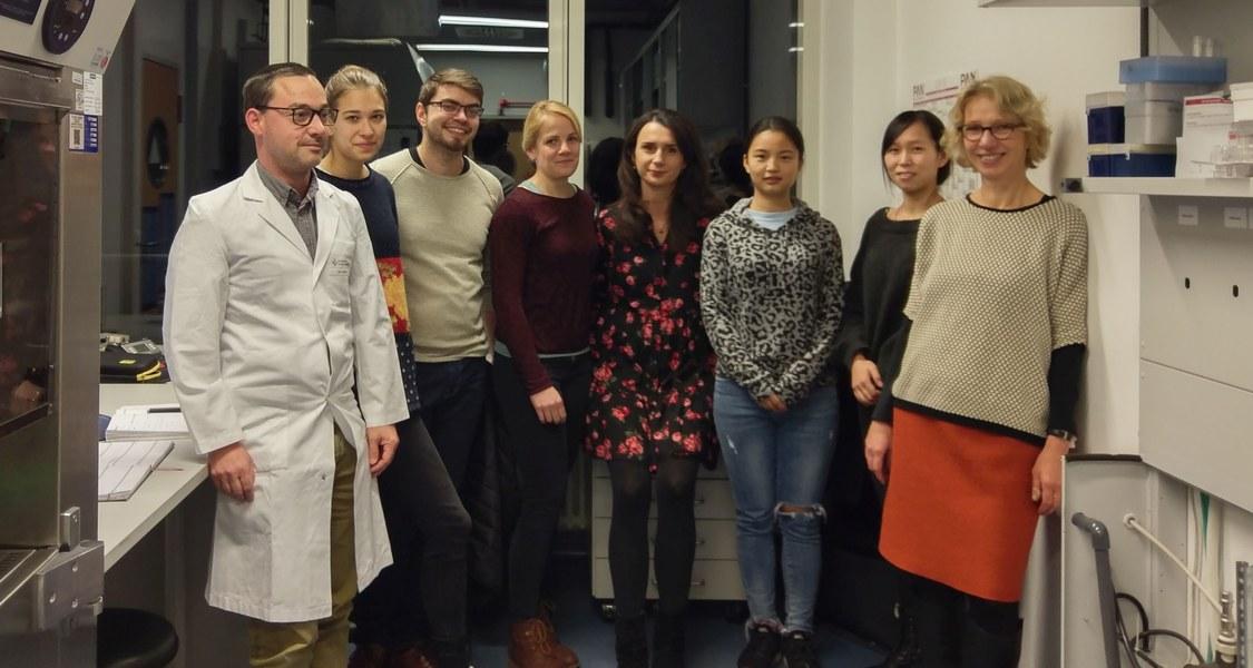 Die Marburger Arbeitsgruppe von Magdalena Huber (ganz rechts) enthüllte zusammen mit Wissenschaftlerinnen und Wissenschaftlern aus aller Welt, wie ein Medikament gegen Multiple Sklerose wirkt.
