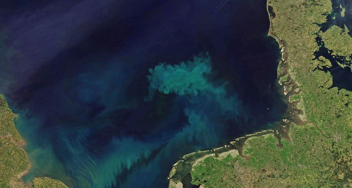 Auf Satellitenbildern wirken die Algenteppiche mit ihren hellen Schlieren wie Kunstwerke. Allein in der etwa 70.000 Quadratkilometer umfassenden Deutschen Bucht entstehen bei der Algenblüte im Frühjahr etwa zehn Millionen Tonnen Biomasse.