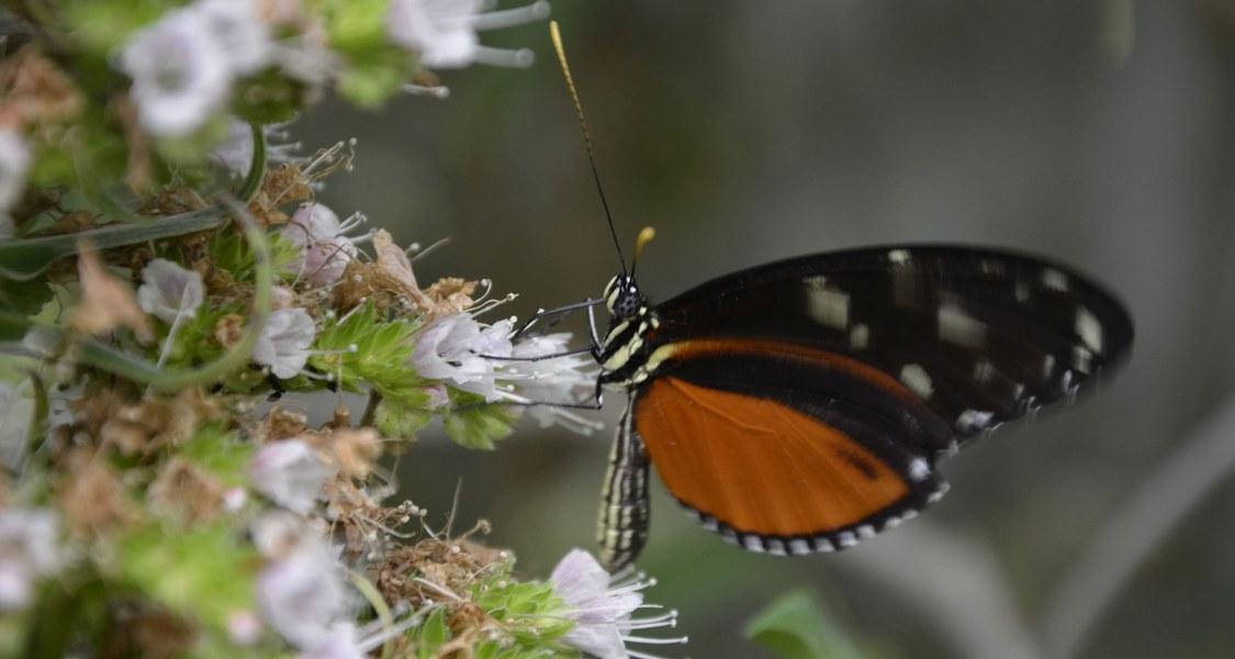 Geflügelte Besucher des Marburger Botanischen Gartens bilden eines der Themen im aktuellen Marburger Unijournal.