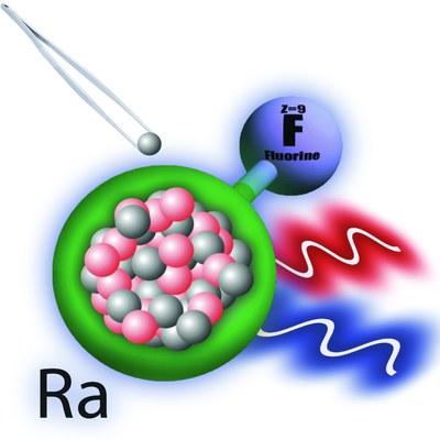 Fügt man zusätzliche Neutronen zum Radiumkern in einem Radiumfluoridmolekül hinzu, so verschieben sich die Energieniveaus, fand ein internationales Team um den Marburger Chemietheoretiker Robert Berger heraus. Abbildung: Silviu-Marian Udrescu