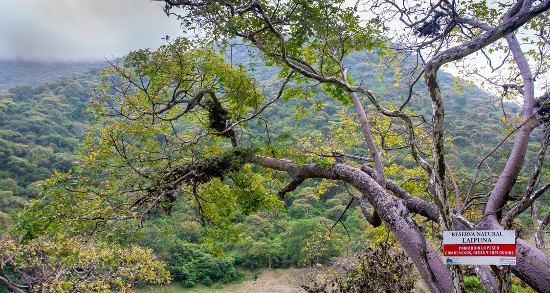 Baum in einem Trockenwald
