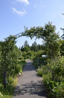 Blick auf den Weg durch den Garten der Nutzpflanzen durch einen bepflanzten Bogen
