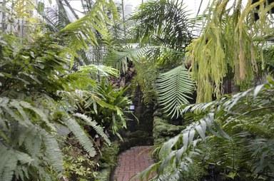 Fußweg durch das Farnhaus mit Pflanzen zu beiden Seiten