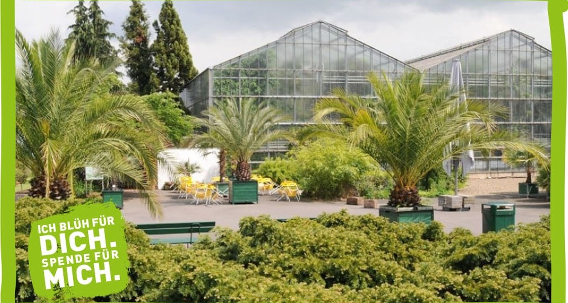 Das Foto zeigt die Gewächshäuser im Botanischen Garten Marburg.