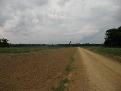 Sojafelder im Einzugsgebiet der BR-163