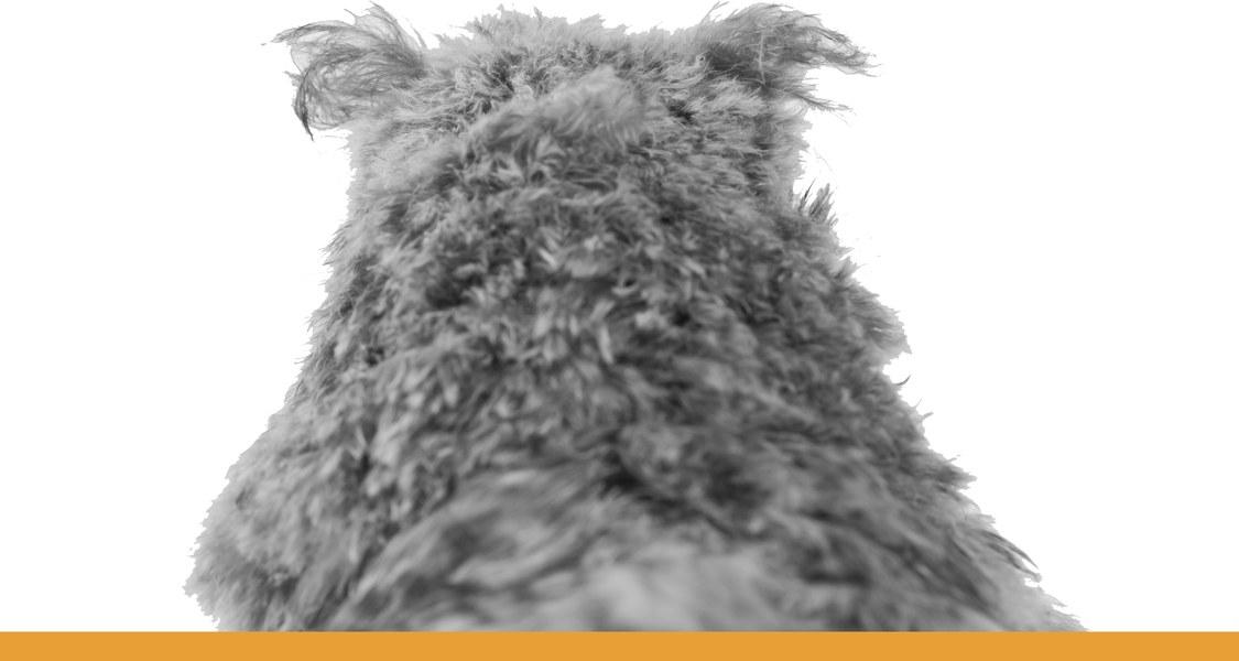 Eule von hinten / schwarz-weiß Fotografie mit orangem Unterstrich