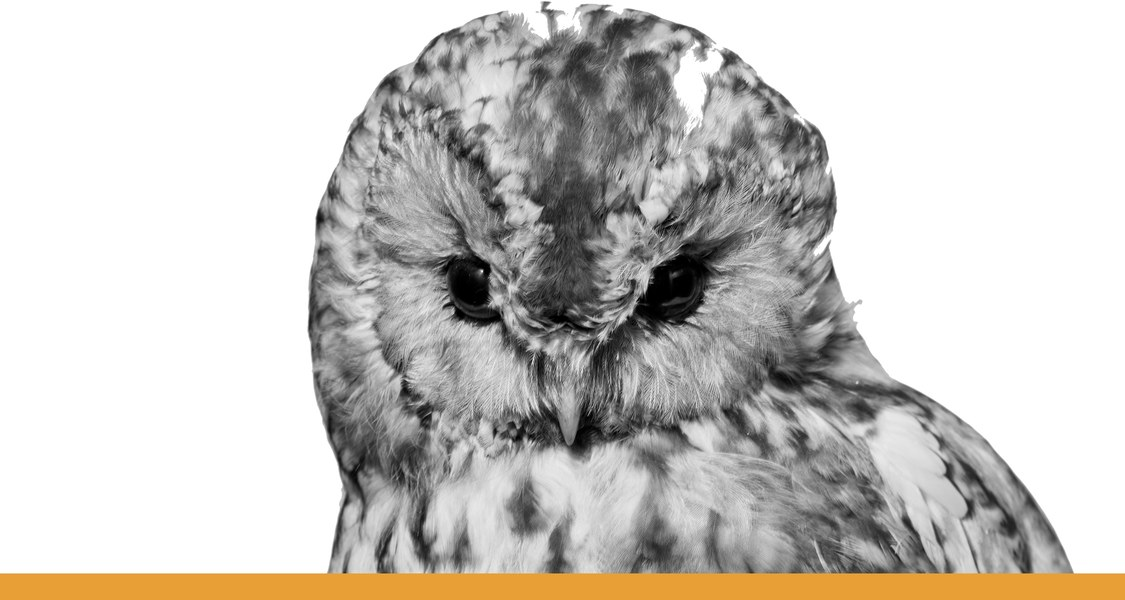 Eule mit in sich gekehrtem Blick / schwarz-weiß Fotografie mit orangem Unterstrich