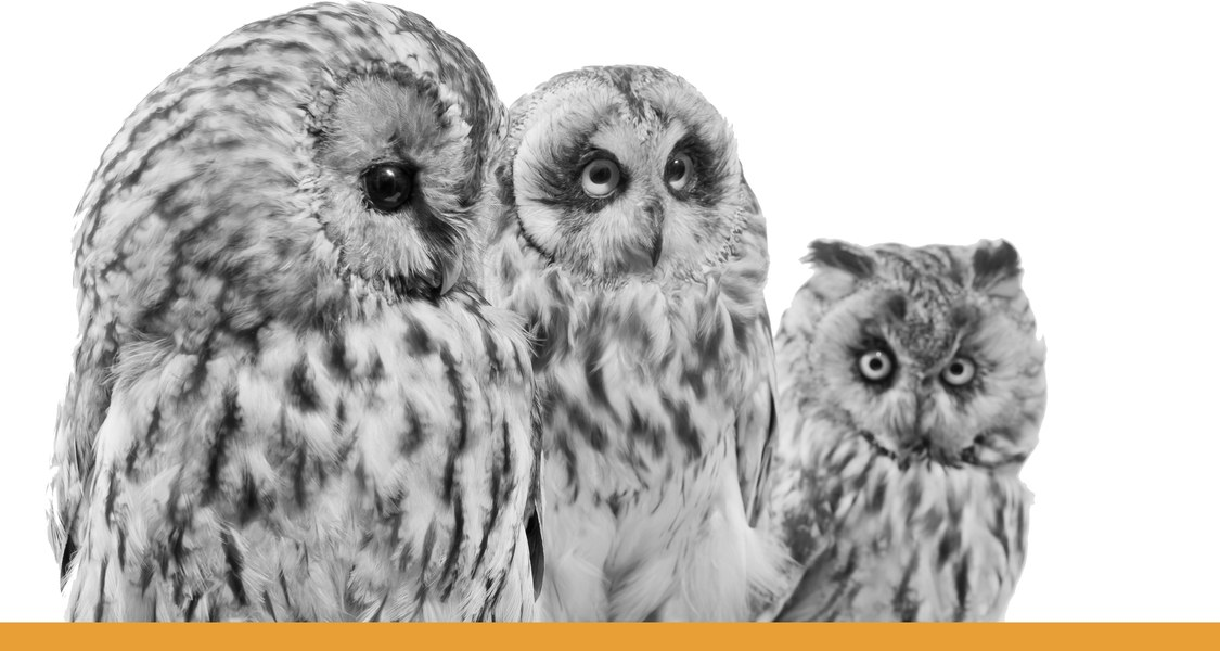 Eulen mit Blick auf Betrachter / schwarz-weiß Fotografie mit orangem Unterstrich