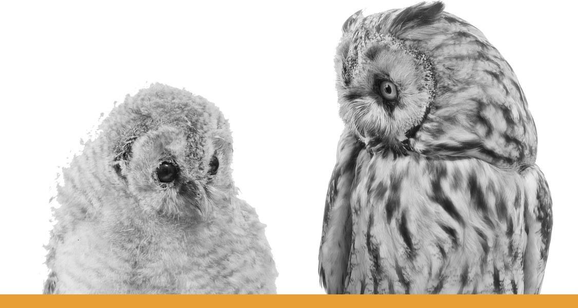 Eulen mit einander zugewandtem Blick / schwarz-weiß Fotografie mit orangem Unterstrich