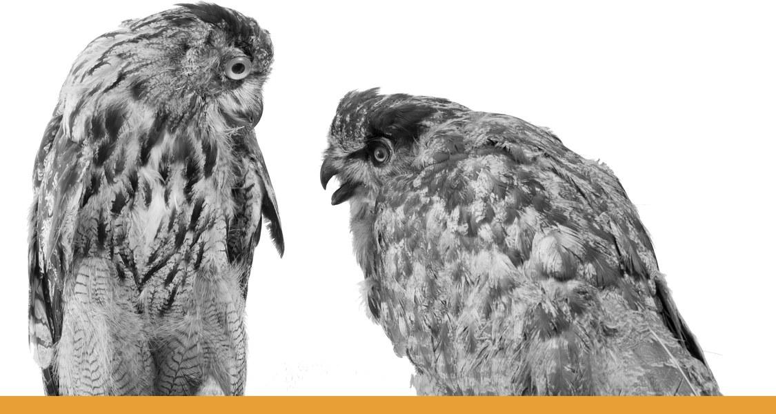 Eule mit einander zugewandtem Blick / schwarz-weiß Fotografie mit orangem Unterstrich