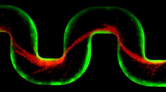 K. Drescher (MPI): Wachstum und Wechselwirkungen in vielzelligen Systemen, von mikroskopischen bis zu makroskopischen Längenskalen