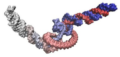 6S RNA 3D