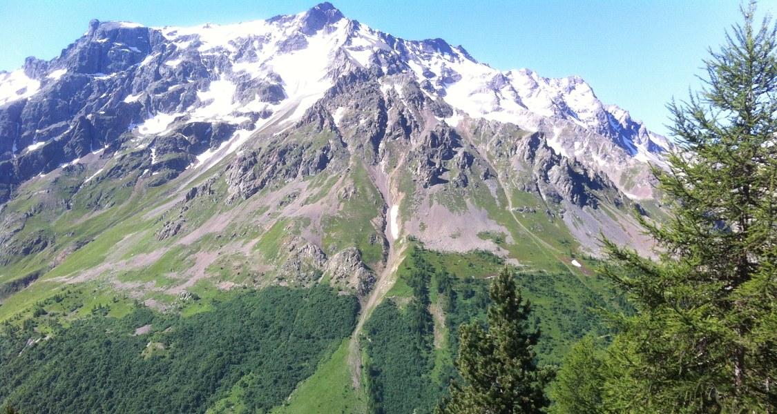 Alpine treeline near the Lautaret pass, French Alps