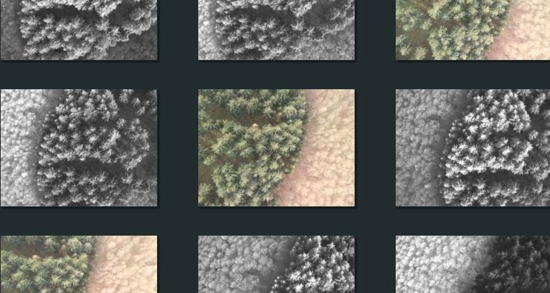Mosaic of different aerial images of a forest patch