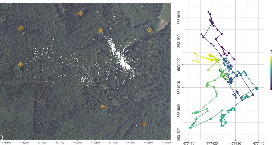 Karte des Marburg Open Forest mit Bewegungsmustern von Fledermäusen.