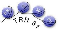 Logo: SFB/TRR 81 - Chromatin-Veränderungen in Differenzierung und Malignität