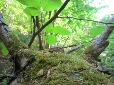 Waldbaden Initiative Bildung und Nachhaltigkeit