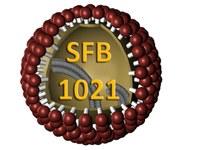 Logo: SFB 1021 - RNA-Viren: Metabolismus viraler RNA, Immunantwort der Wirtszellen und virale Pathogenese