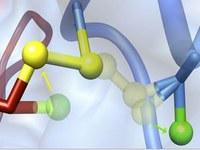 Abbildung: Logo des Schwerpunktprogramms SPP 1710 - Dynamik thiolbasierter Redoxschalter in der Zellphysiologie
