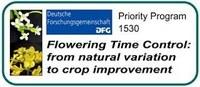 Abbildung: Logo Schwerpunktprogramm SPP 1530 - Flowering time control: from Natural Variation to Crop Improvement