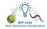 Abbildung: Logo des Schwerpunktprogramms SPP 1926 - Next Generation Optogenetics: Tool Development and Applicatio
