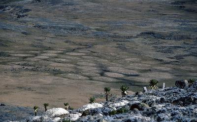 landscape_p4.PNG