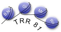 Logo CRC/TRR 81 - Chromatin Changes in Differentiation and Malignancies